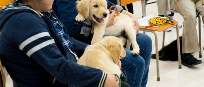 子犬と飼い主のためのパピーパーティー