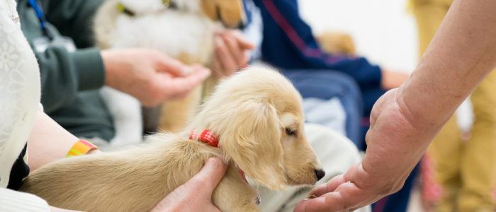 子犬の時に学ぶ犬のしつけ
